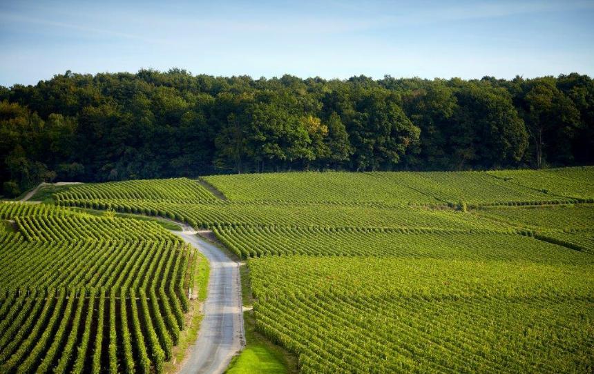 Chemin des Vignes Bouzy